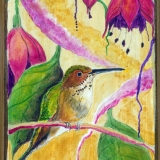Hummingbird-with-Fuchsia