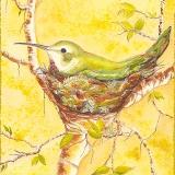 Mama-Hummingbird