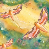 Sphinxs-Moths-and-Dogwood